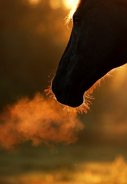 the breath of a horse in silhouette